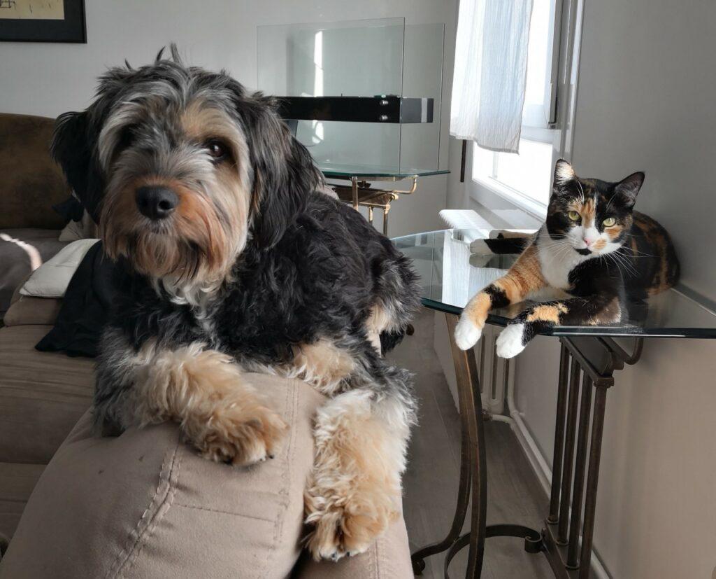 Chien et chat perchés
