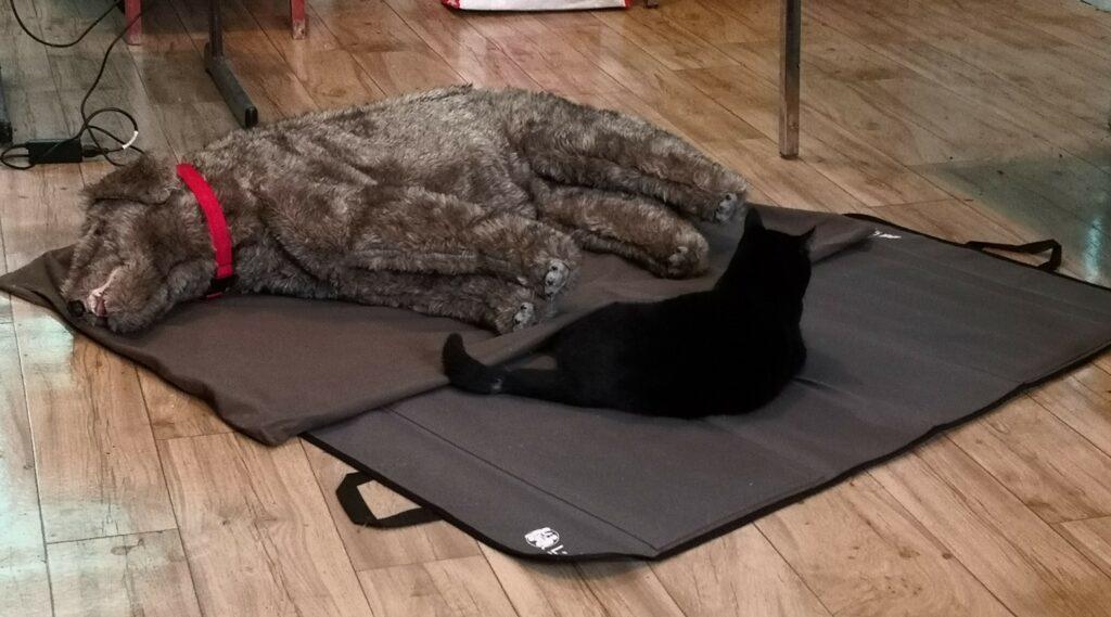 Chien et chat endormis - comprendre son chien