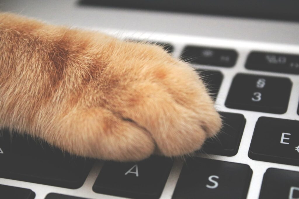 Patte de chat orange appuyant sur l'ordinateur
