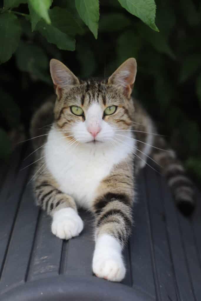 comprendre son chat, comportementalisme félin